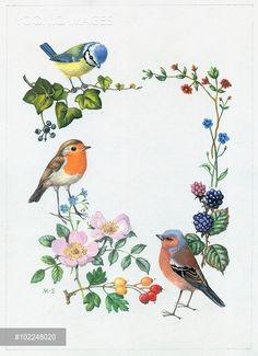 Beautiful Fantasy Art, Beautiful Birds, Watercolor Bird, Watercolor Paintings, Botanical Illustration, Illustration Art, Decoupage, Mickey Mouse Wallpaper, Flower Bird