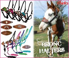 Chick's NEW bronc halters! Zebra, alligator, cross, pistol, star, praying cowboy and many more designs all under $29.99!