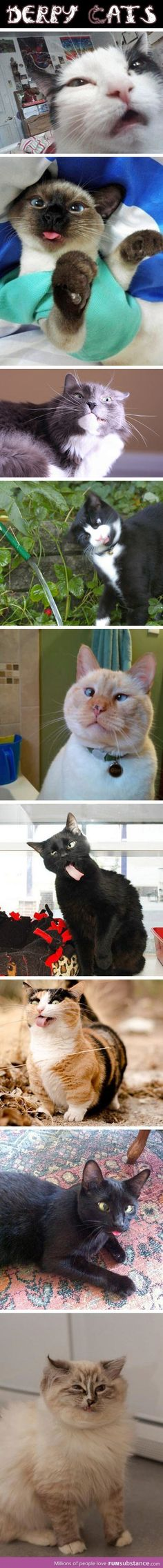 Derpy cats...can't stop laughing!! @Denice Rivas  makes me think of my Frankie!!