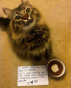 Amazing collection of cat shaming pictures with cats holding signs with big eyes and loving purrs. Discover more such interesting cat shaming pics here. Cat Shaming, Cute Kittens, Cats And Kittens, Funny Kitties, Chat Maine Coon, Funny Animals, Cute Animals, Funniest Animals, Crazy Animals