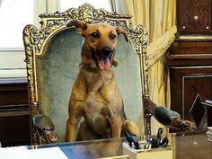 O presidente argentino Mauricio Macri, publicou uma foto de seu animal de estimação, Balcarce, um cachorro vira-lata que foi adotado em junho do ano passado.