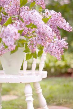 Lilacs. My favorite harbinger of spring.