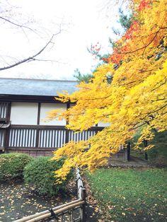 弘前公園の紅葉(autumn leaves in Hirosaki,Aomori)