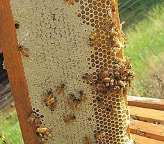 How to get started keeping bees.  Becoming a beekeeper is a wonderful journey. Carolina Honeybees Farm