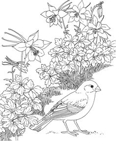 Free Printable Coloring PageColorado State Bird And Flower Lark Bunting