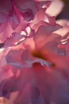 Find images and videos about pink, flowers and petals on We Heart It - the app to get lost in what you love. Pretty In Pink, Pink Flowers, Beautiful Flowers, Perfect Pink, Pink Roses, Foto Macro, Tout Rose, Pink Photography, Beauty Photography