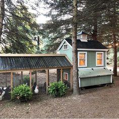 Backyard Chicken Coops, Chicken Coop Plans, Building A Chicken Coop, Diy Chicken Coop, Chickens Backyard, Chicken Feeders, Chicken Tractors, Chicken Ideas, Backyard Farming
