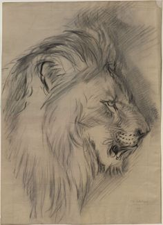 "Enlarged Drawing of John Ruskin's ""Sketch of the Head of a living Lion"" Arthur Burgess, c. 1870 - 1872, the Ashmolean Museum, Oxford"
