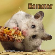 Hamsters Wall Calendar: This wall calendar for 2013 is filled with photographs of unbelievably cute hamsters. Each month will bring a smile to your face. The perfect gift for any hamster lover!  http://www.calendars.com/Small-Pets/Hamsters-2013-Wall-Calendar/prod201300001916/?categoryId=cat00343=cat00343