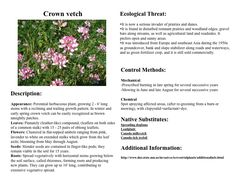 Crownvetch -Community Action Duluth - Duluth Stream Corps - Invasives
