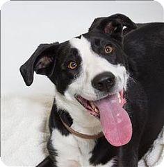 San Luis Obispo, CA - Border Collie Mix. Meet Mc, a dog for adoption. http://www.adoptapet.com/pet/16707195-san-luis-obispo-california-border-collie-mix