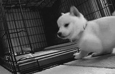 Attention : Chien adorable ! http://www.15heures.com/gif/Xz84?utm_source=SNAP #CUTE