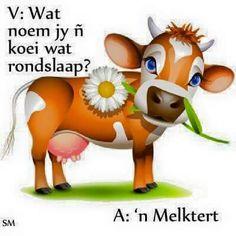 cow feed kamatie blend www