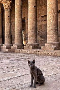 Cats In Ancient Egypt, Egypt Cat, Desert Design, Cute Cats And Kittens, Ancient Civilizations, Pet Birds, Dog Cat, Cute Animals, Pets