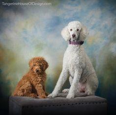 22 best Poodle images on Pinterest   Poodles, Dog breeds ...