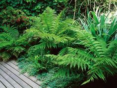 Try these tall plants in shady areas of your garden or landscape.