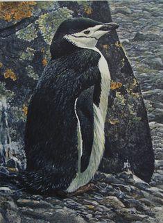 Artist/Naturalist ROBERT BATEMAN (Canadian: 1930) | Painting... Chinstrap Penguin