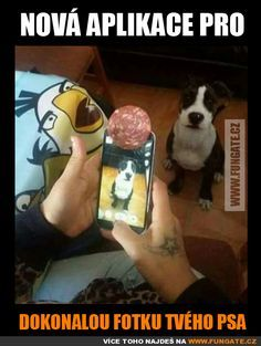 Well, that's one way to get a good picture of your dog! Funny Animal Pictures of The Day – 27 Pics Animals And Pets, Funny Animals, Cute Animals, Dog Memes, Funny Memes, Jokes, I Love Dogs, Cute Dogs, Tierischer Humor