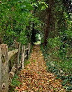 ~WONDERFUL wooded paths~ I love peaceful paths to enjoy nature. Country Life, Country Roads, Country Living, Foto Nature, Walk In The Woods, Pathways, Garden Paths, Belle Photo, The Great Outdoors