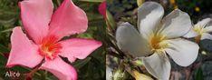 alice, alina 1 Alice, Plants, Plant, Planets