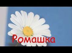 Ромашка ролик - YouTube