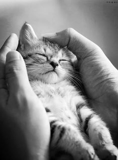 "I think I'll take a kitten nap.   ❁❁❁Thanks, Pinterest Pinners, for stopping by, viewing, re-pinning, & following my boards.  Have a beautiful day! ❁❁❁ **<>**✮✮""Feel free to share on Pinterest""✮✮"" #cats #gifts www.catsandme.com"
