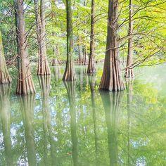 【amipon555】さんのInstagramをピンしています。 《なかなか思ったような写真が撮れないので、過去撮った写真を。 * * * * #olympus#olympuspen#olympuspenepl7#ミラーレス#igersjp#ig_japan#japan_daytime_view#木#樹#tree#森#forest#nature#myworld_in_green#福岡#fukuoka#fukuokapics#fukuoka_meet_info#篠栗#篠栗九大の森#九大の森#写真撮ってる人と繋がりたい#写真好きな人と繋がりたい#カメラ女子#こんばんは#お疲れ様#風邪気味#明日も頑張る》