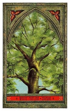 White Poplar - Strange Realms' Realms - Green Man Tree Oracle - Photo of 27 Celtic Tree, Irish Celtic, Celtic Signs, Mystical Meaning, Fortune Cards, Poplar Tree, Tarot Astrology, Tree Woman, Oracle Cards