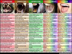 【人間は雑食動物ではなかった!Part1】ヒトは雑食動物だという嘘!!