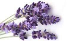 5 remedios naturales para calmar tus nervios