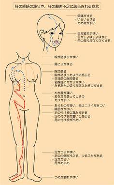 『肝の経絡』と卵巣嚢腫 この病気は、中医学的に「肝の経絡」と深く関係があります。 卵巣嚢腫でお悩みの女性は、この経絡の詰まりや流れの滞りが多く見受けられます。