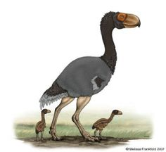 Gastornis | Gastornis Diatryma Ornitthoolithus oeuf coquille