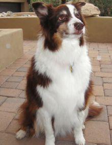 Harley, 2011 Hero Dog Awards winner - Hearing Dog