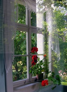 Lovely Window Lace curtains & red geraniums make a perfect combination for summer windows. I already do this in my home. Window View, Open Window, Cottage Windows, Red Geraniums, Patio Interior, Looking Out The Window, Red Curtains, Through The Window, Window Dressings