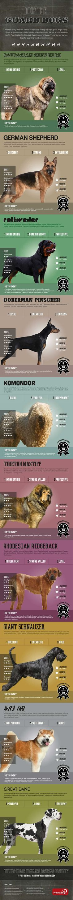 The World's Top Ten Guard - Do you fancy an infographic? There are a lot of them online, but if you want your own please visit www. Online girano molte infografiche, se ne vuoi realizzare una tutta tua visita www. Best Guard Dog Breeds, Best Guard Dogs, Pet Dogs, Dogs And Puppies, Mountain Dogs, Dog Care, Doge, Dog Friends, I Love Dogs