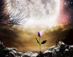 Arte fotográfico ¿ la rosa del principito ?