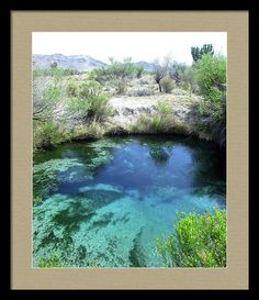 Desert Framed Print featuring the photograph Ash Meadows Pool #2 by Michele Ross