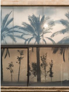 Louise Ljungberg sharing photos by me and others. For inspiration only. Minimalism Living, Summer Aesthetic, Simple Aesthetic, Light And Shadow, Decoration, Summer Vibes, Weekend Vibes, Palm Trees, Summertime
