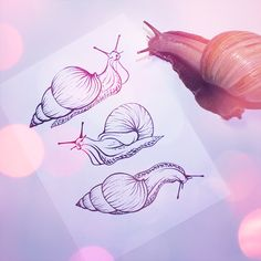 #inkdrrrwing #snail #inktober #ink