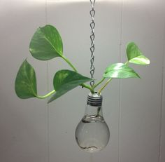 Hey, I found this really awesome Etsy listing at https://www.etsy.com/listing/195808858/real-recycled-hanging-light-bulb-vase