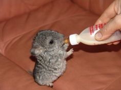 20 Animals You Never See As Babies - love the camel and groundhog!