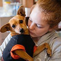 Available Pets At Ozark Humane Society In Harrison Arkansas