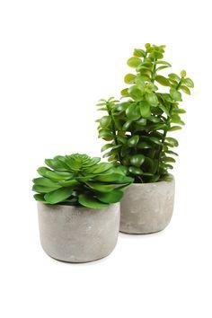 cement pot plant, SUCCULENT