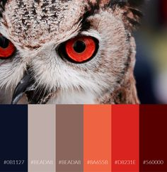 Download the Avram Color Palette for free. Avram is an intense fall color palette.