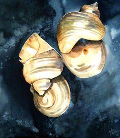 Shells on Blue by Julie Martin