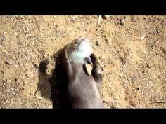 I basically love most videos in which animals speak.