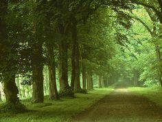도시숲 교통섬에 대한 이미지 검색결과