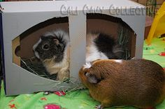 Shoe box / hay box - new toy for floortime (idea from Cali Cavy Collective)