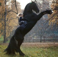 Largest Horse Breeds in the world How is it possible this? Most Beautiful Horses, All The Pretty Horses, Animals Beautiful, Cute Animals, Beautiful Beautiful, Funny Animals, Cute Horses, Horse Love, Black Horses
