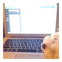 """Been a busy day """"off"""" with my little helper!"""